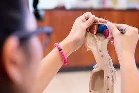 Fashion Schools In Miami Private In Miami Riviera Schools