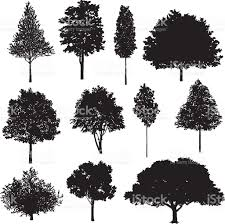 White Oak Tree Drawing Set Of Tree Drawings Stock Vector Art 501574920 Istock