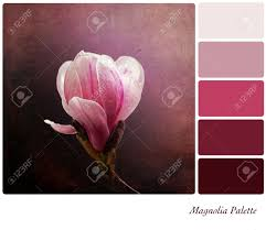 a a single pink magnolia flower on a vintage style background