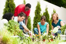 Benefits Of Urban Gardening - powerhouse growers healthy cities