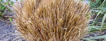 springtime gardening pruning ornamental grasses live creatively