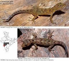 growing more butterflies in south east queensland gecko hills to species new to science june 2014