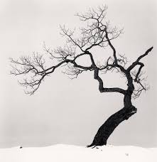 beautiful black and white photos of a sideways japanese tree by