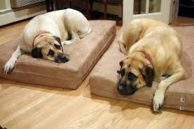 extra large dog beds for mastiffs u2014 modern home interiors making