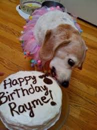 ideas for a puppy birthday cake luv my dogs