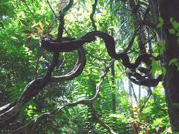 Plants In The Tropical Rain Forest - plants in a tropical rainforest tutorvista com