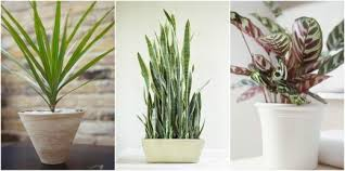 good inside plants inspiring 15 best indoor plants good inside plants for small space