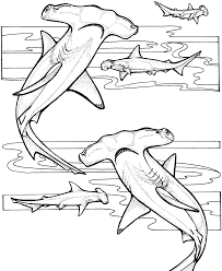 entertaining shark coloring pages u2014 allmadecine weddings