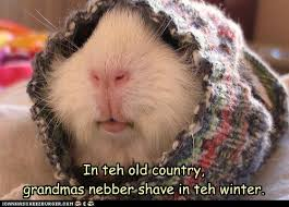 Shaved Guinea Pig Meme - i can has cheezburger shave funny internet cats cat memes