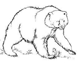 printable polar bear coloring pages sheets teddy animal