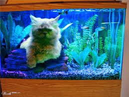 fish aquarium for cats cats aquariums and fish tanks 4 2017