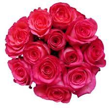 bulk roses hot pink roses fresh online flowers bulk flowers flower