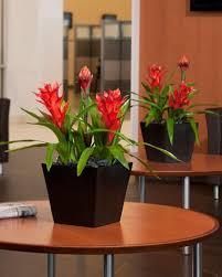 12 best artificial plants images on artificial plants