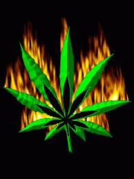 imagenes perronas mota imagenes de marihuanas para descargar hojas pinterest