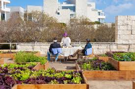 Herb Robert Pictures Getty Images The Getty Salad Garden An Installation Of Organic Heirloom