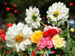 Cute Flower Wallpapers - beautiful flowers wallpaper free download on wallpaperget com