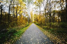 free photo nature pathway trees walkway autumn walking path max