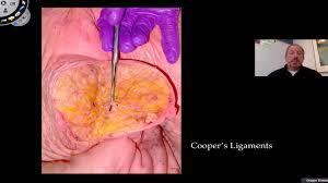 Female Breast Anatomy And Physiology Breast Anatomy Youtube