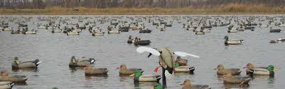 Mallards Duck Blind Illinois Duck Hunting Guided Waterfowl Hunts For Duck U0026 Goose