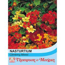 nasturtium u0027climbing mixed u0027 thompson u0026 morgan