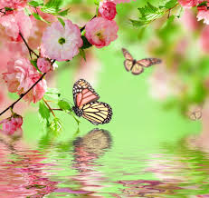 spring blossom pink flowers butterflies reflection water spring