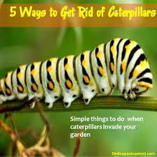 5 ways to get rid of caterpillars online pest control