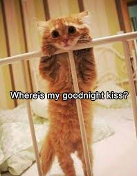 Goodnight Meme Cute - funny animal pictures of the day 22 pics cute daily lol pics