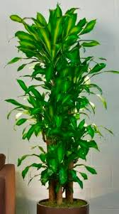 live indoor plants the biggest contribution of live