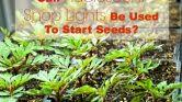 shop light for growing plants fluorescent light for plants extraordinary how to select the best