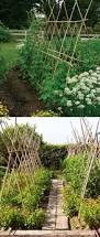 Trellis Poles 19 Successful Ways To Building Diy Trellis For Veggies And Fruits