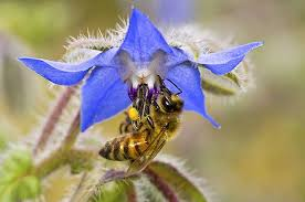 Flowers Bees Pollinate - top 10 flowers that attract bees birds and blooms
