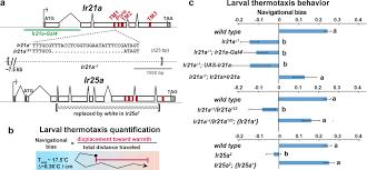 the ionotropic receptors ir21a and ir25a mediate cool sensing in