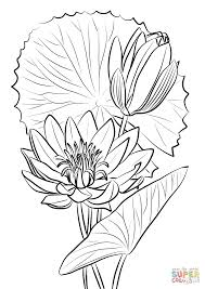 egyptian water lily nymphaea caerulea coloring page free
