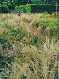 100 best ornamental grasses images on ornamental