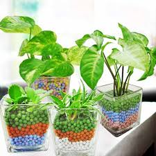 indoor plants singapore singapore indoor plants table garden mini plants flowers and