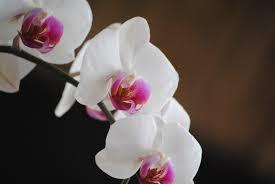 free images nature branch blossom white stem flower petal