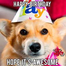 Happy Birthday Meme Dog - corgi happy birthday memes mne vse pohuj