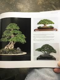 bonsai australian native plants bonsai and penjing ambassadors of peace u0026 beauty book review