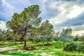 free images landscape tree nature forest meadow countryside