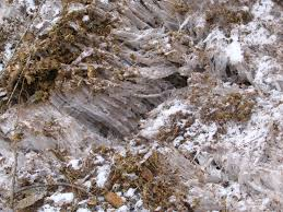 what is frost heave protecting plants from heaving in winter