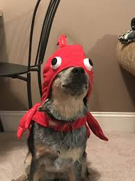 lobster costume psbattle dog in lobster costume photoshopbattles