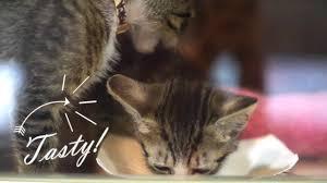 kitten lady visits the aspca kitten nursery youtube