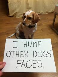 Funny Dog Face Meme - 50 best funny dog quotes meme images and pictures funnyexpo
