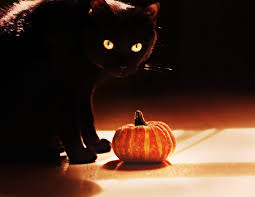 Halloween Cat Poems Happy Halloween Teen Art Photo About Animals Objects Halloween