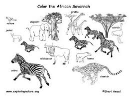 download savanna coloring pages ziho coloring