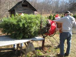 the best christmas tree farms in nj best of nj nj lifestyle