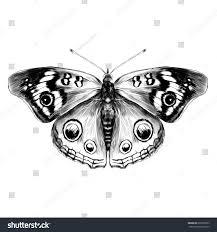 butterfly open wings top view symmetry stock vector 600738203