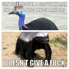 Honey Badger Memes - image 748663 honey badger know your meme