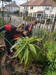 our garden in autumn christ the king girls u0027