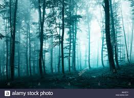beautiful turquoise blue color light foggy forest scene biscay
